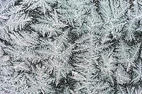 Ice crystals on window, Dinero, Lake Corpus Christi, South Texas, USA