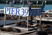 Pier 39 sea lions, San Francisco