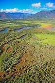 Mangrove, rivičre de Dumbéa, Nouvelle-Calédonie
