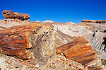 Pedistal logs and petrified log sections on Blue Mesa, Petrified Forest National Park, Arizona USA