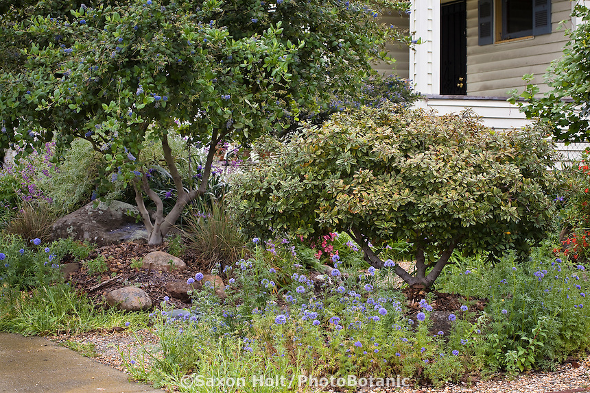 Holt 978 photobotanic stock photography garden for Low maintenance evergreen shrubs