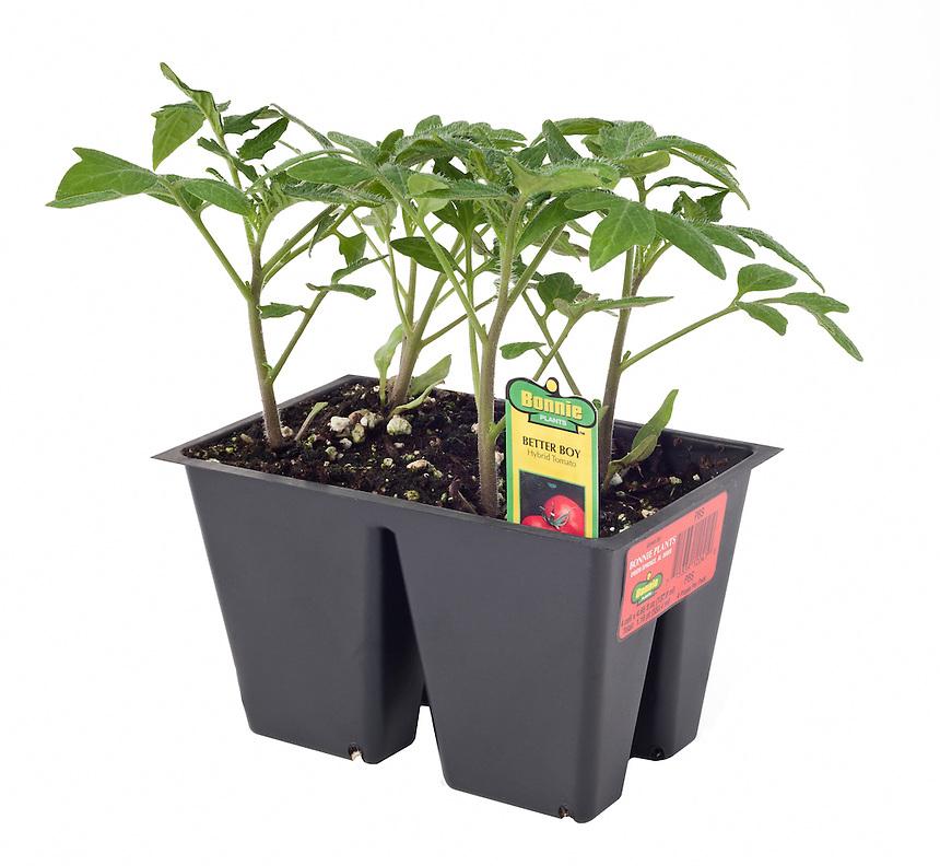 Bonnie 4 Pack Tomato 1 16qt 550 4ml W Tag Bonnie Plants