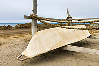 Umiak, whale hunting boats made from Walrus hides.