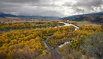 Idaho, Eastern, Swan Valley. Overlooking the South Fork of the Snake River lined with cottonwood trees in autumn.