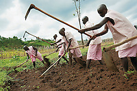 Rwanda. Southern province. District of Muhanga. Central jail of Gitarama. A group of black teenagers boys, wearing the pink prisoner's clothes, turn over the soil with hoes,in a field outside of the prison during the morning agriculture's lesson. Gardening tools. Minors in detention. Detention pending trial and after trial, when sentenced to prison. The non-governmental organization (NGO) Fondation DiDé - Dignité en détention runs the Encademi (Encadrement des mineurs) program. Prison centrale de Gitarama. Quartier des mineurs.  © 2007 Didier Ruef