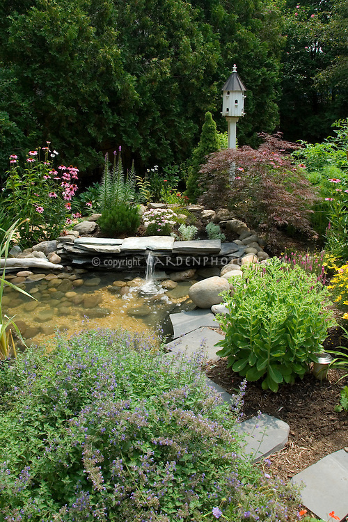 Birdhouse, water garden with fountain, Nepeta catmint, Echinacea purpurea, Sedum, perennials, Japanese maple, evergreens, walkway in a summer garden scene