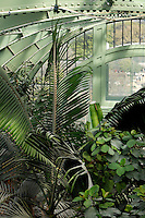 Tropical Rainforest Glasshouse (formerly Le Jardin d'Hiver or Winter Gardens), 1936, René Berger, Jardin des Plantes, Museum National d'Histoire Naturelle, Paris, France. Detail showing the metal structure of the roof of the Art Deco style glasshouse with luxuriant tropical foliage.