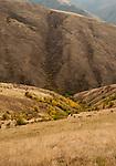 Fall colors in the ravines near White Bird Hill Grade