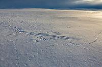 Arctic north slope.