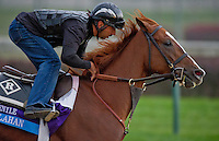 Dullahan, trained by Dale Romans and to be ridden by Julien Leparoux, exercises in preparation for the 2011 Breeders' Cup at Churchill Downs on November 3, 2011.