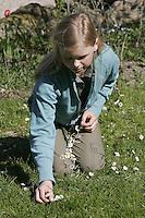 Mädchen, Kind bastelt sich einen Gänseblümchen-Kranz, Blumenkranz, Blumen-Kranz, Kranz aus Blüten, Gänseblümchen, Bellis perennis, Daisy