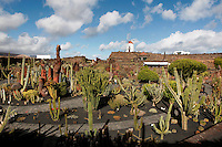 General view of the Cactus Garden, Lanzarote, Canary Islands, Spain, pictured on November 26, 2010 in the afternoon. Designed by local artist Cesar Manrique (1919-92), who restored the windmill and erected metal sculptures, the garden grows over 1000 varieties of cactus selected by botanist Estanislao Gonzales Ferrer. Lanzarote, the Easternmost of the Canary Islands, lies 125km East of the African coast, in the Atlantic Ocean. Like the other islands in this autonomous Spanish archipelago, Lanzarote is originally Volcanic. Picture by Manuel Cohen.