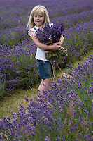 A little girl stands amongst the rows of lavender clutching freshly picked bundles