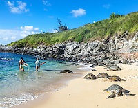 Hawaiian green sea turtles rest at Maui's Ho'okipa Beach while surfers take their boards farther out to sea.