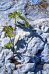 Plant grows on a blue house wall in Chefchaouen, Morocco.