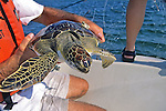 James Buehler W/ Green Turtle