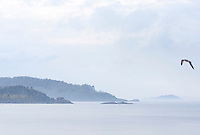 Fog rolls over, from left, Middle Island, Partridge Island and Little Presque Isle as seen from Sunset Point on Presque Isle Park in Marquette, Michigan.