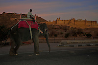 Elephant with view towards the Jaipur Amber Fort Rajasthan, India