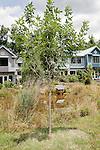 June 15, 2011. Carrboro, NC.. Pacifica is a passive solar co-housing community located in the heart of Carrboro.