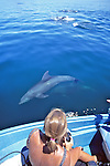 Weezie Parsons Observing Bottlenose Dolphin