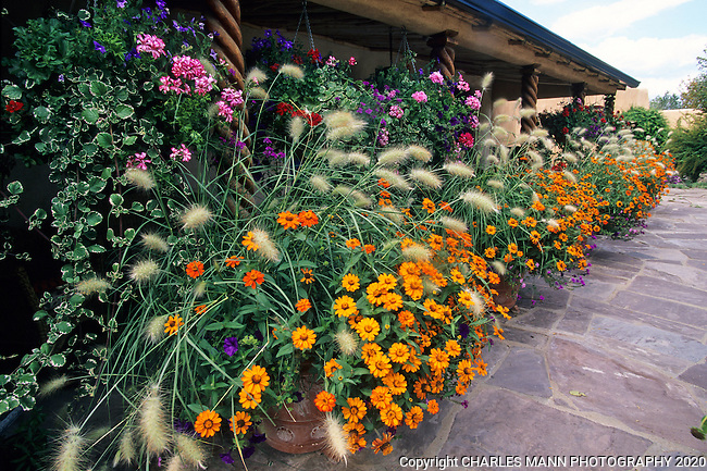 Susan Blevins of Taos, New Mexico, created an elaborate home garden featuring containers, perennial beds, a Japanese themed path and a regional style that reflectes the Spanish and pueblo architecture of the area. Rows of containers with orange flowres and ornamental Pennisetum grass line the portal, or porch in the front patio.r
