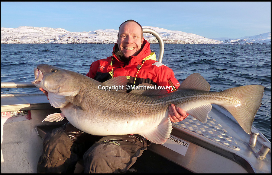 BNPS.co.uk (01202 558833)<br /> Pic: MatthewLowery/BNPS<br /> <br /> Cods-wallop...<br /> <br /> Fisherman Matthew Lowery is celebrating his catch of the day - the largest ever cod caught by a British angler.<br /> <br /> Matthew, 39, was on a fishing trip to Norway when the mighty cod that weighed 76lbs 1oz went for his lure bait.