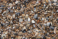 9 June 2006: Shells, rocks and debris detail along the Atlantic Ocean beach scene along the Outerbanks in North Carolina after a passing storm. Surf crashes along the beach on wet sand and dark blue skies. Graphic, art, scenic view east coast.