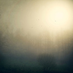 Sun shining through the fog on an autumn morning. Textured photography.