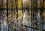Sunlight shining through trees in a swamp in America with reflections