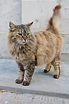 Cat At La Recoleta Cemetery