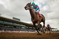 ARCADIA, CA - FEBRUARY 04: Royal Mo #1, ridden by Victor Espinoza is uncontested in the Robert B. Lewis Memorial Stakes at Santa Anita Park on February 4, 2017 in Arcadia, California. (Photo by Alex Evers/Eclipse Sportswire/Getty Images)