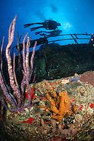 Wreck of The Coakley Bay Tugboat .Butler Bay Deep Wrecks.St. Croix.U.S. Virgin Islands