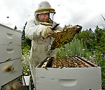 Gerry Veley tends to several bee hives he operates at his Oregon Cream Honey Farm  west of Hillsboro. He produces honey comb, beeswax and even lip balm out of this former schoolhouse home shop....
