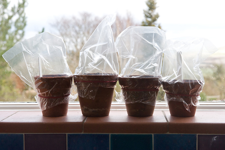 Germinating pumpkin/squash seeds
