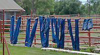 blue jeans hanging upside down drying on a rural clothesline