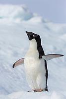 Brown Bluff, Antarctic Peninsula.