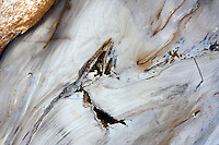 Petrified wood found along the Columbia River in Washington on February 8, 2011.  (photo credit Karen Ducey)