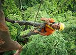 Seram Forest Canopy