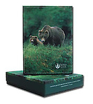 A collection of 20 total cards and envelopes presented in a handsome gift box These cards feature 4 each of 5 distinct bear images taken in and around Alaska and the Northwest United States. Watermark does not appear on product.