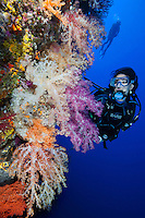 RH0159-D. scuba diver (model released) admires soft corals (Dendronephthya sp.) growing along sheer wall at 90 feet. Palau, Pacific Ocean.<br /> Photo Copyright &copy; Brandon Cole. All rights reserved worldwide.  www.brandoncole.com