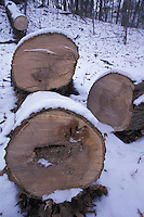Sawn Tree Lying in Forest