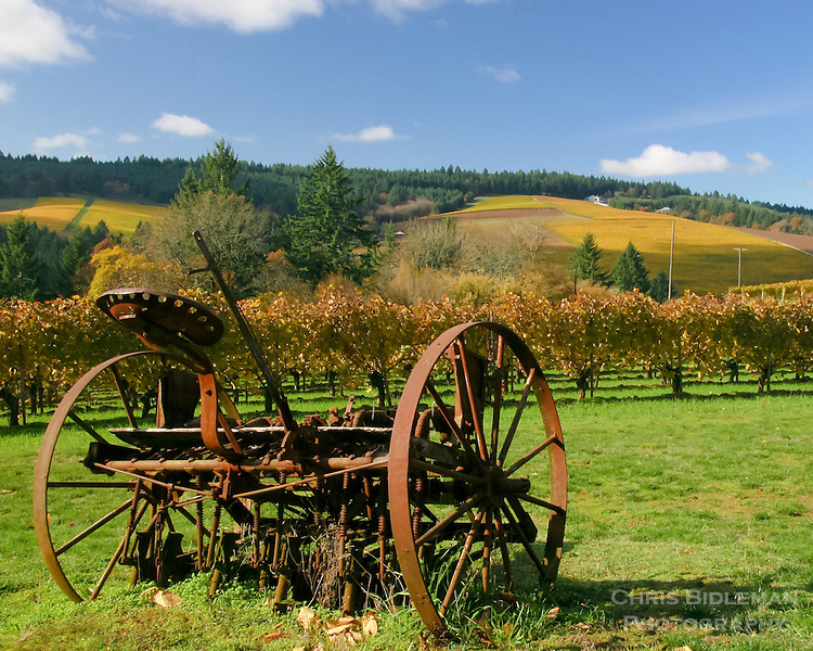 Old time plow in vineyard with yellow Fall colors in the Willamette Valley with rolling hills and blue sky.