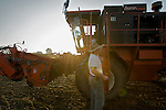 Charles Fry heads back into the harvester after offloading beans...Edamame harvest at the Fry Farm in Tiffin, Ohio.Charles C Fry.American Sweet Bean Company