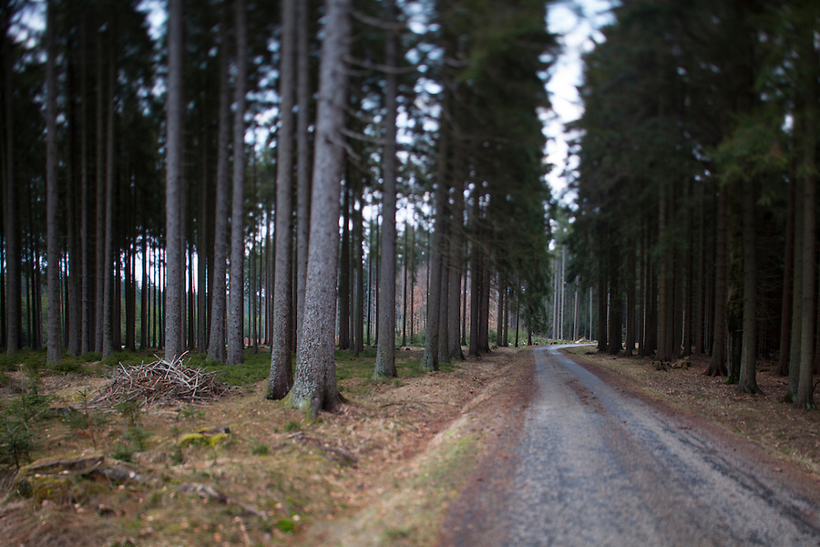 Driving through a forest in southern Bohemia, Czech Republic, Europe