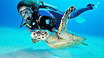 Diver and Hawksbill Turtle, Grand Cayman Island