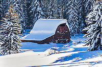 a bucolic winter landscape in Jackson Hole Wyoming.  A moose relaxes near a picturesque log barn engulfed under a thick blanket of snow.