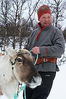 Lars N. Bransfjell fra Brekken in Mid-Norway is training a reindeer in the traditional way.