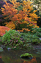 WA08898-00...WASHINGTON - Autumn near the Moon Bridge in Seattle's Kubota Garden.