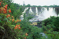 Santo Antonio waterfall on Jari river coming down from Guiana (Guyana) Highlands, Guiana Shield, Brazil, with Hippeastrum puniceum (Amaryllidaceae).