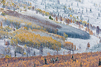 Early snowfall in the boreal forest in the hills surrounding Fairbanks,  Alaska.